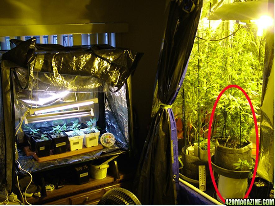 Bedroom grow room