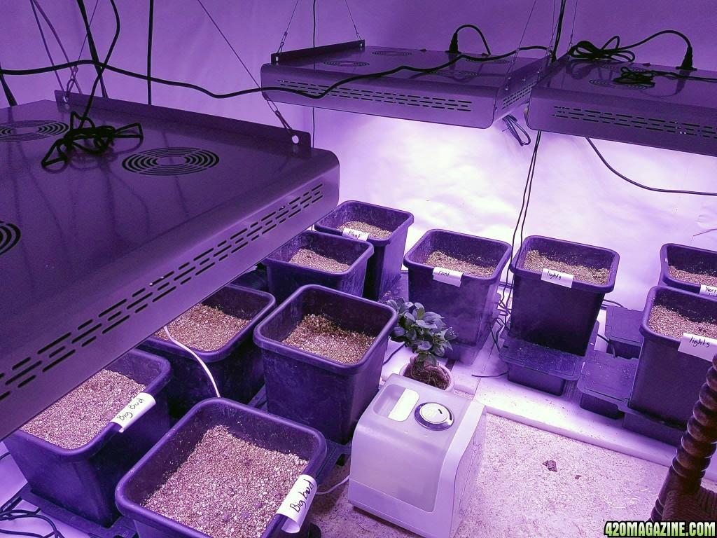 growroom01.jpg