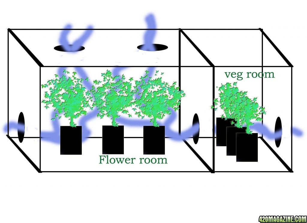 Grow Tent Ventilation Diagram  Bing images