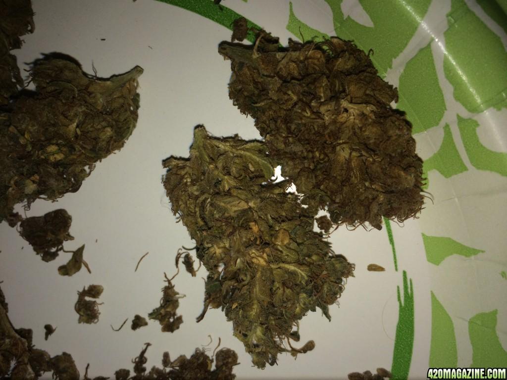 Moldy Weed Help