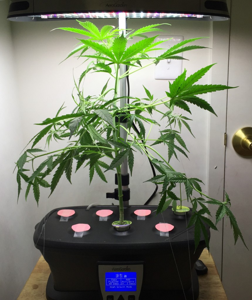 Is My Plant S Bud Ok 420 Magazine
