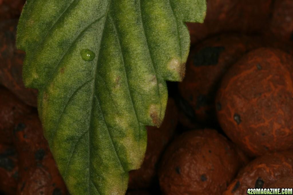 leaf2_2.JPG