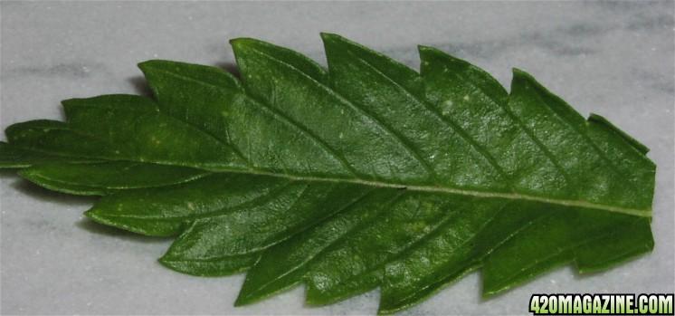 leaf_damage_001.jpg