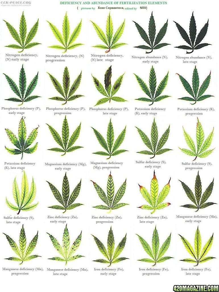 Thread high soil ph and leaf deficiencies