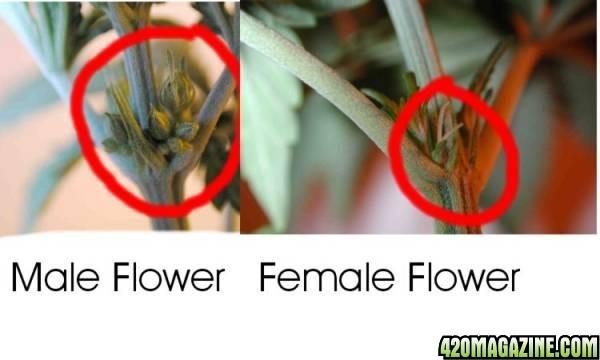 male-n-female.jpg
