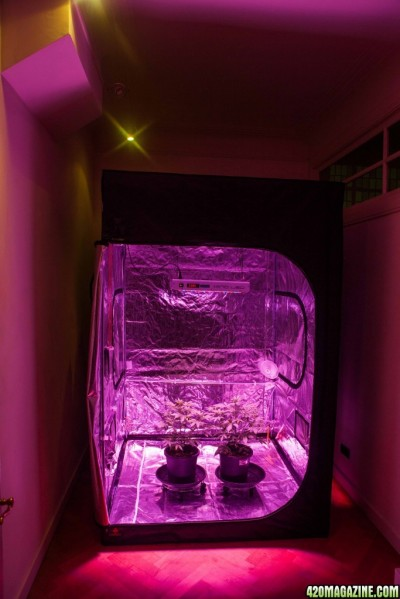 Should You Turn Salt Lamps Off : Autoflowers - can I turn off my LED-light during watering?
