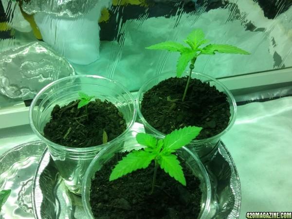 Seedlings-Day8-HP.jpg