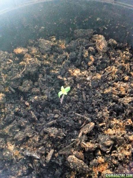 seedlingDAY2.jpg