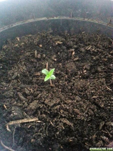 seedlingDAY3.jpg