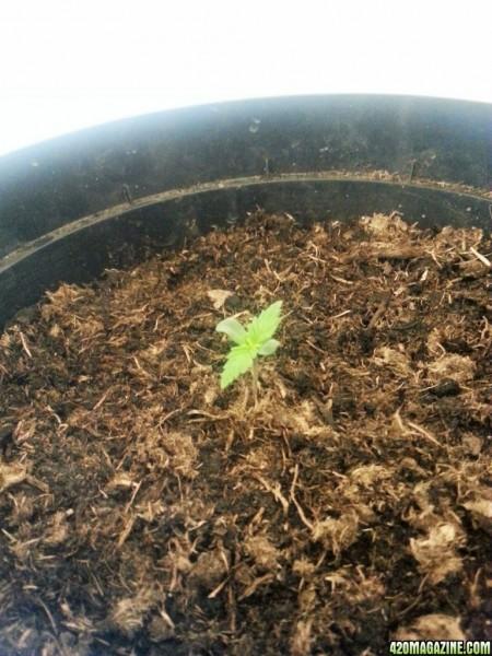 seedlingDAY4.jpg