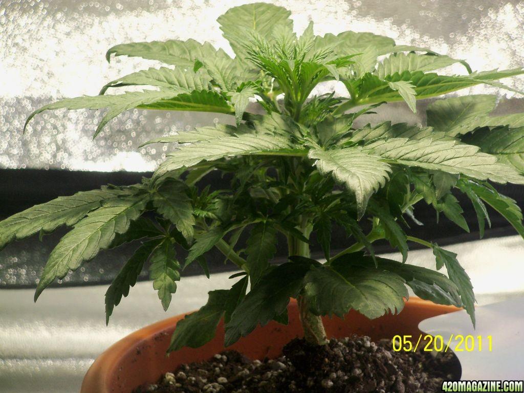 my_plants_006.JPG