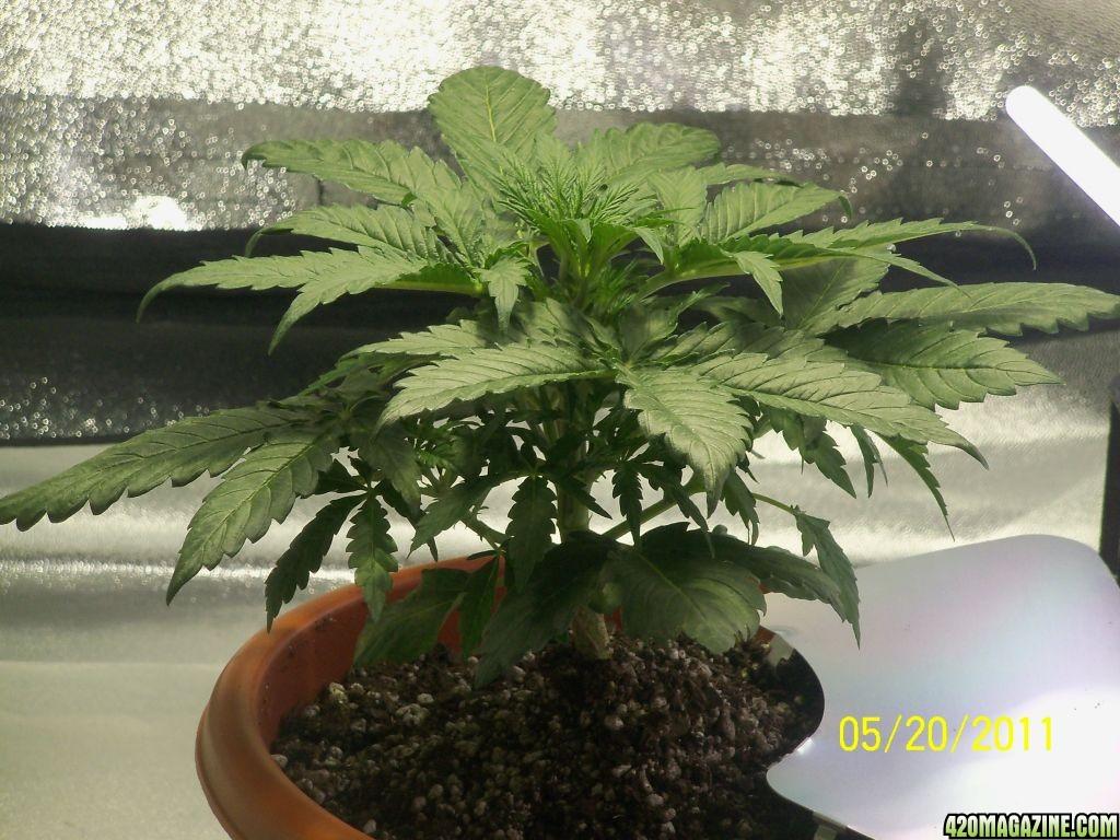 my_plants_007.JPG