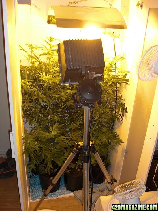 new_camera_7_035pb.JPG
