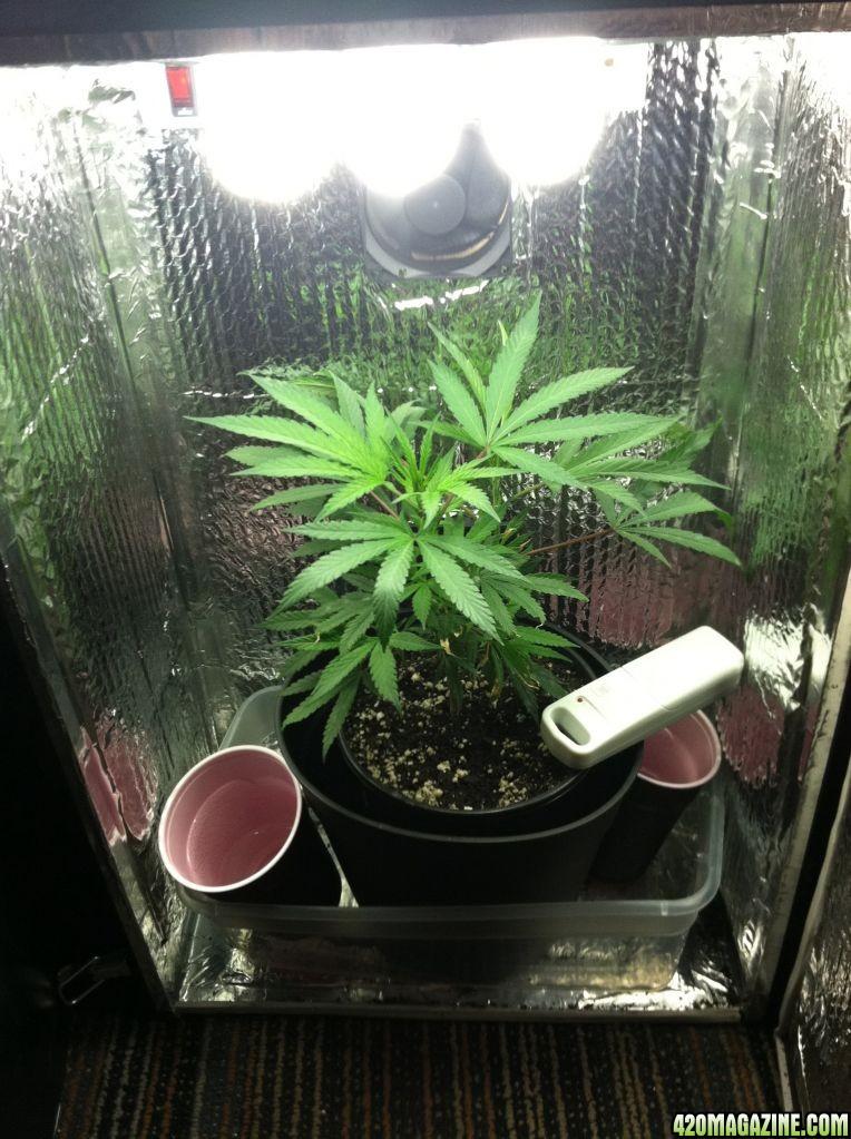 Гроубоксы для выращивания травы 827