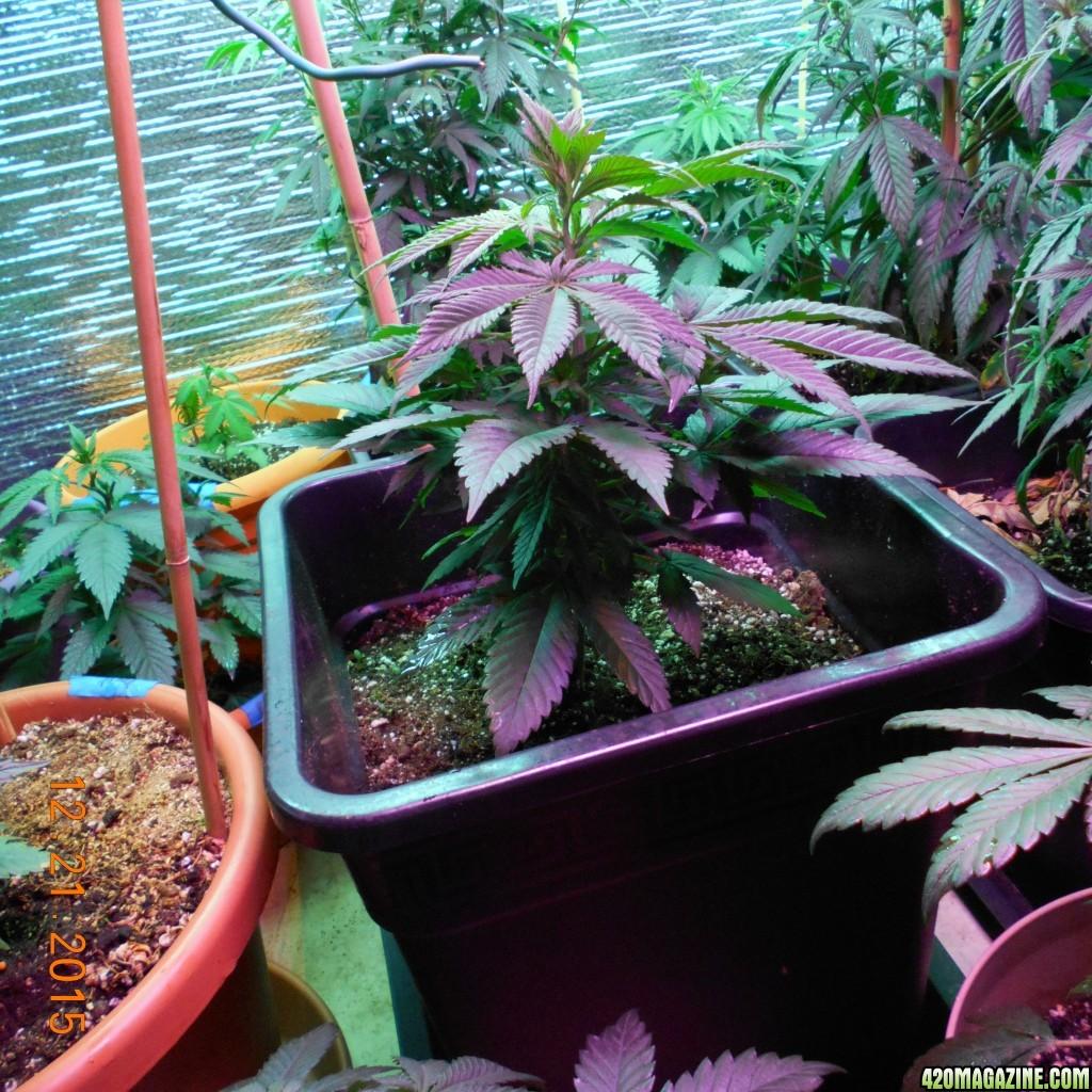 Cottage 420 39 s organic perpetual indoor garden for Eco indoor garden house