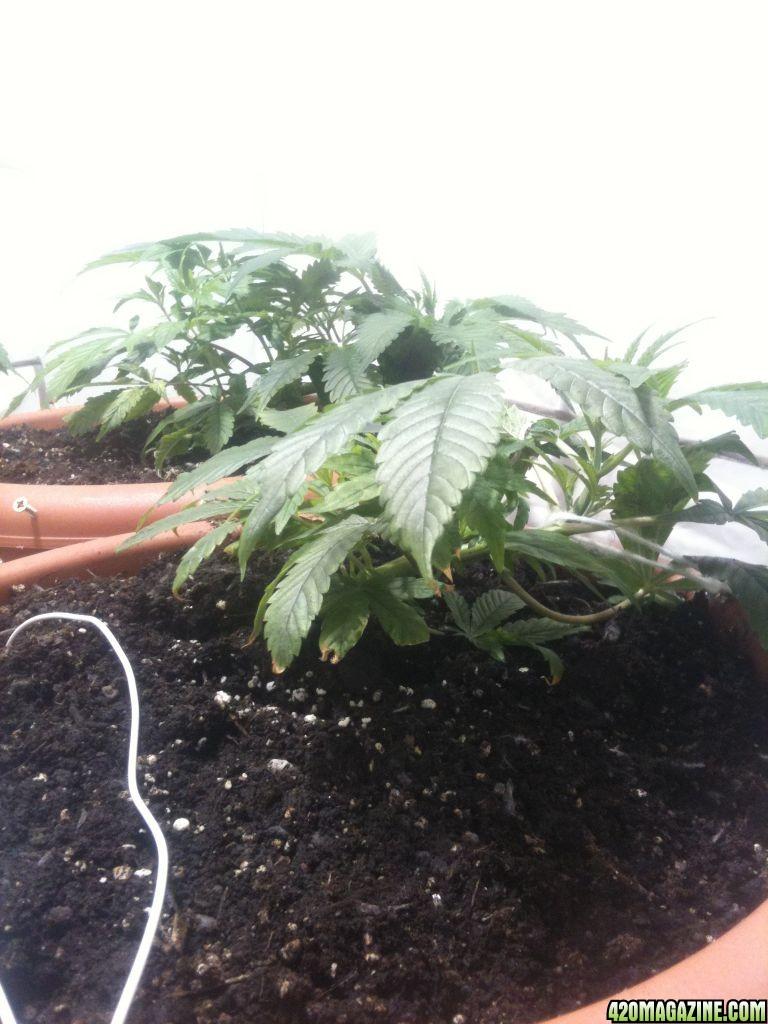 plant_007.jpg
