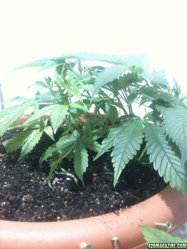 plant_008.jpg