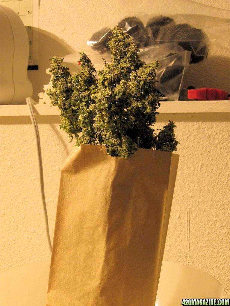 plant_128.JPG