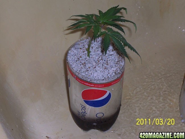 Come SOG With Me: 112 Plants, 2 Liter, Hempy SOG | 420
