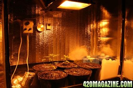 plants_after_transplant.jpg