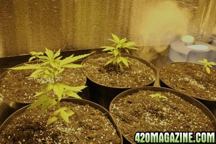 plants_after_transplant2.jpg