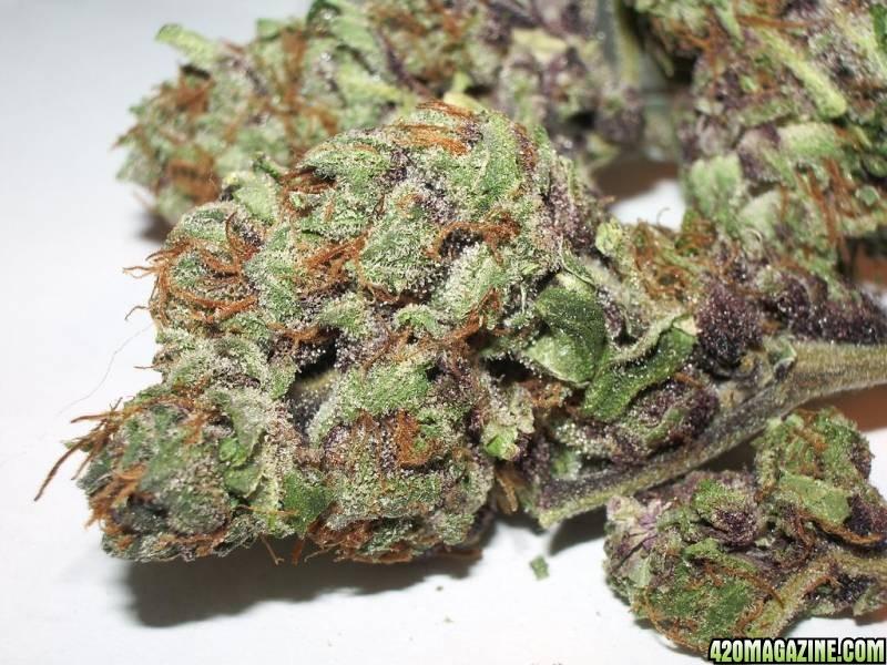 purple_two-resized.JPG