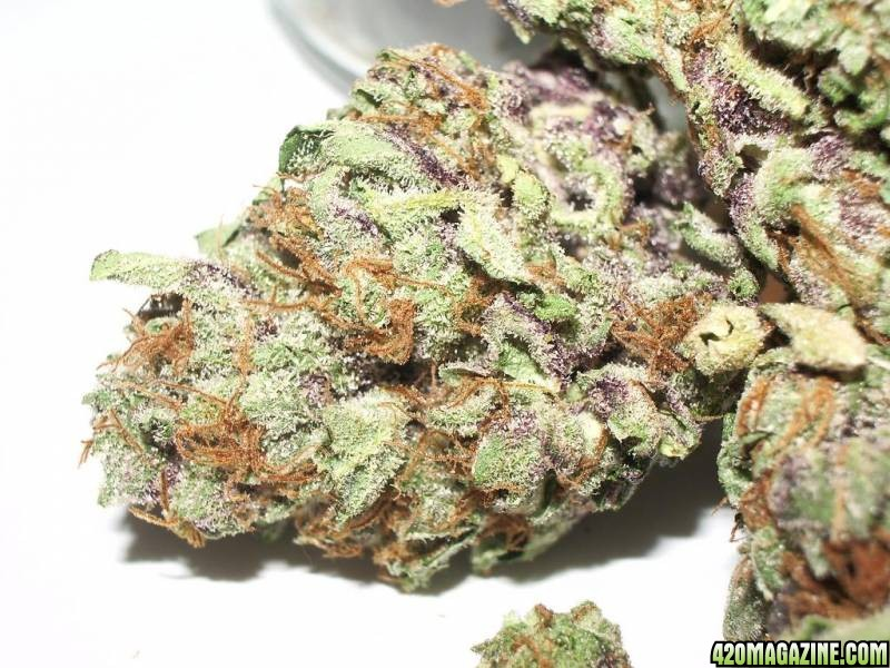 purpleone-resized.JPG