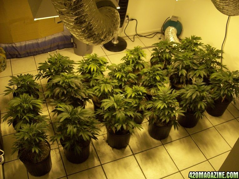 how to set up a grow room for weed