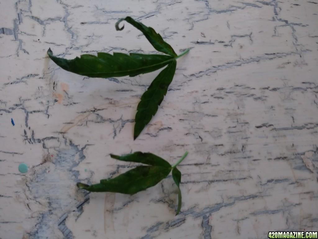 small_leaves.jpg