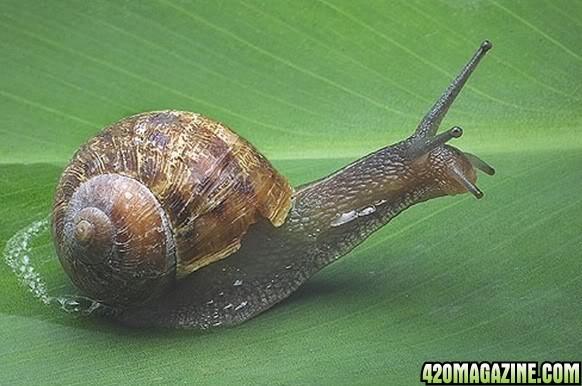 snailz.jpg