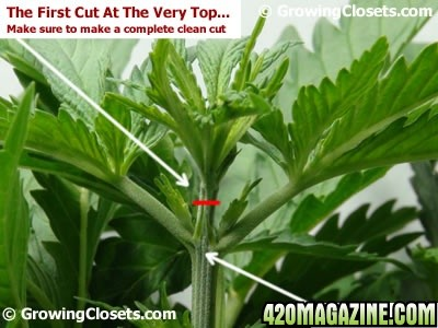 how to grow one weed plant in a closet