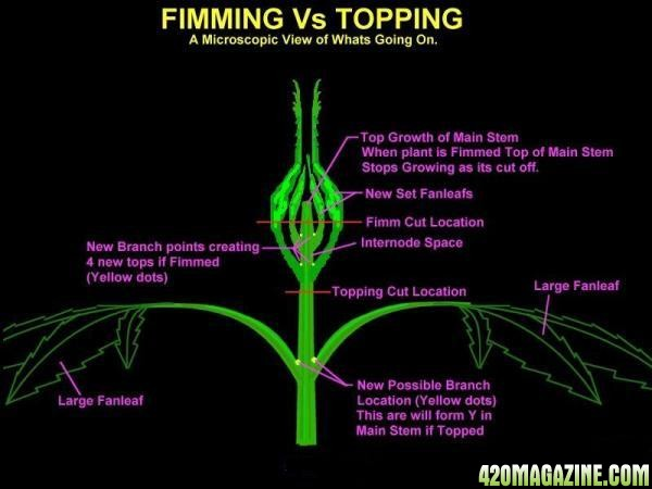 fimming