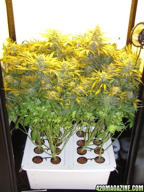 closet grow box any