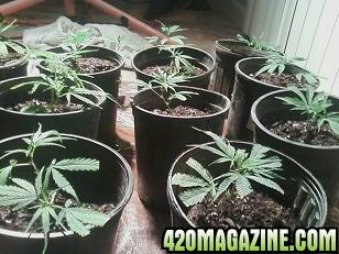weed57.jpg