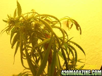 weed_0031.jpg