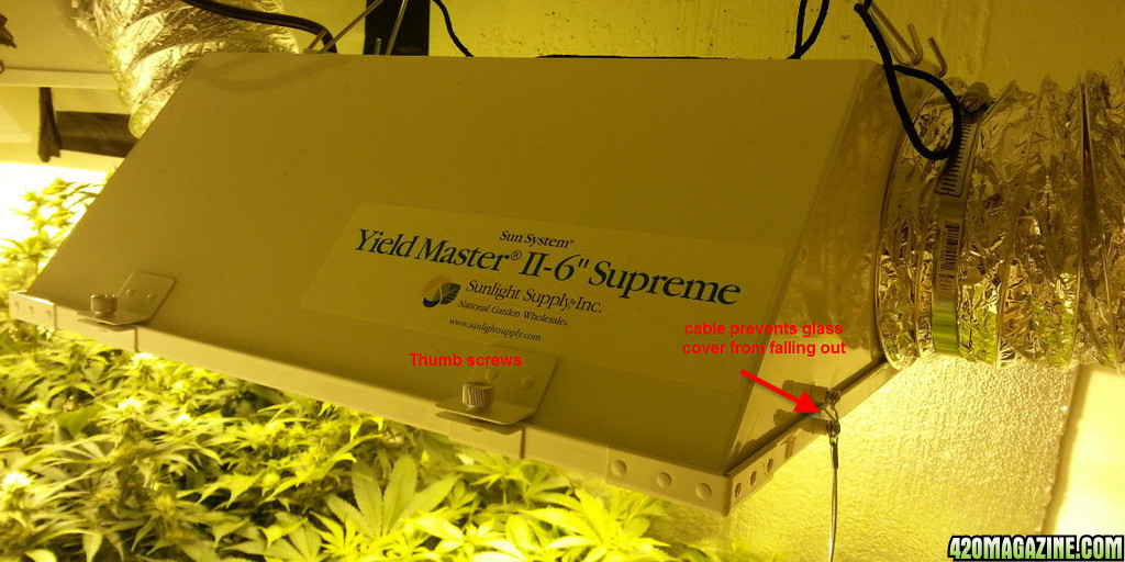 How To 10oz Per Plant Perpetual Indoors