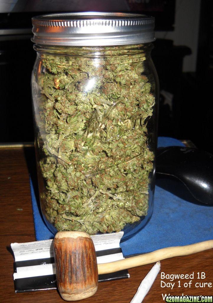 What Does a Marijuana Plant Look Like  Smokerigscom