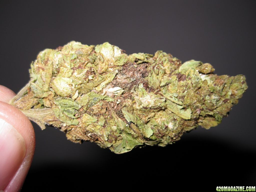 Buy Marijuana Seeds Online  With Guaranteed Arrival and