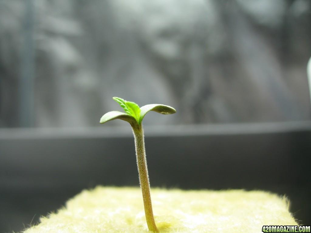0018_Seed_Grow.JPG