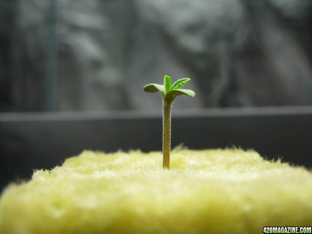 0020_Seed_Grow.JPG
