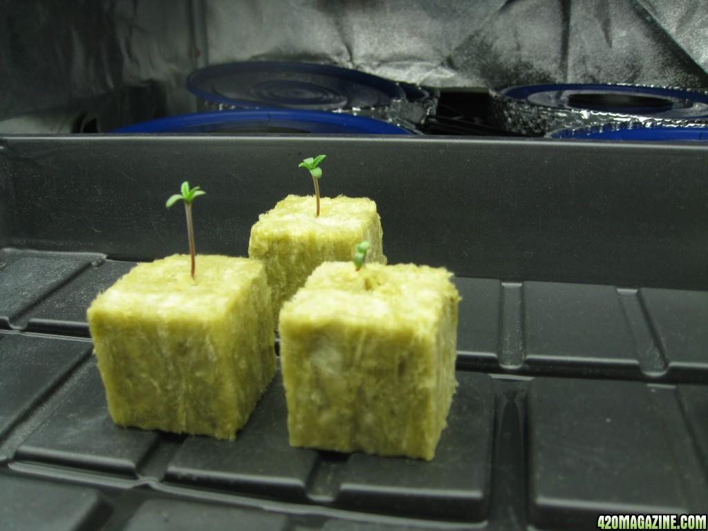 0022_Seed_Grow.JPG