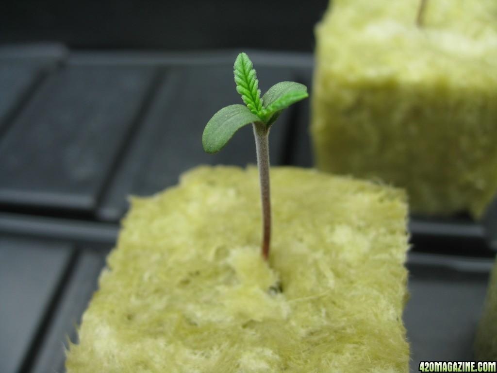 0023_Seed_Grow.JPG