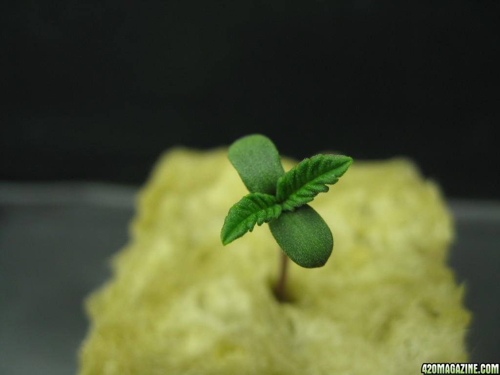 0024_Seed_Grow.JPG