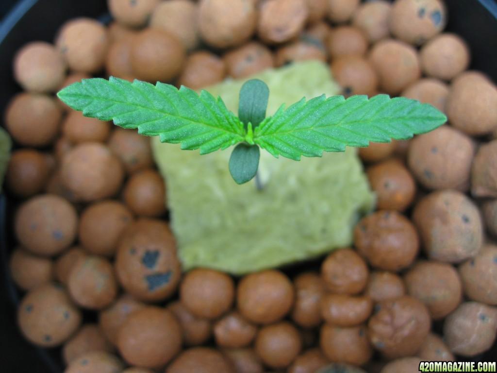 0034_Growing.JPG