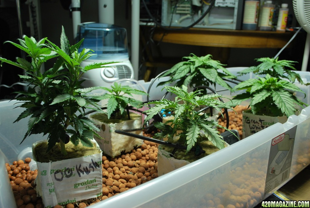 how to make a hydro setup for weed