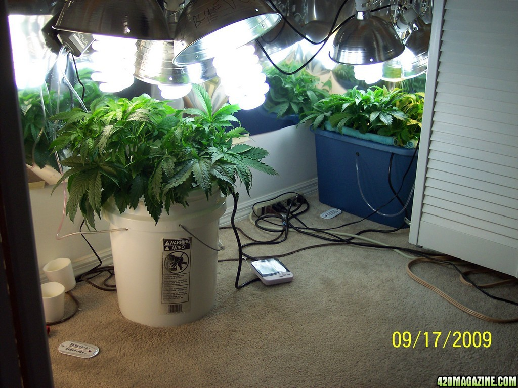 Bubblers in grow rooms a real help