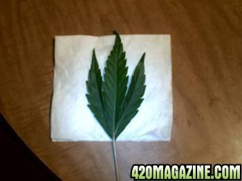 3_leaf.jpg
