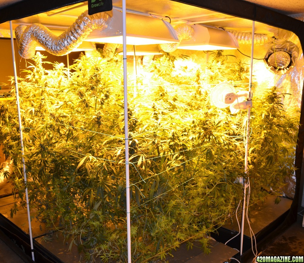 What is a grow tent