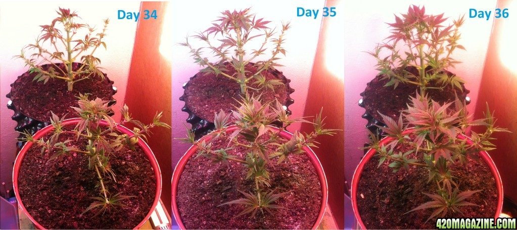 Gallery images and information: Weed Plant Time Lapse