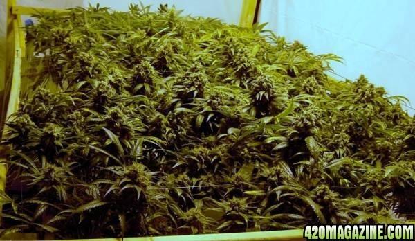 Growroom_setup_020.JPG